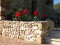 Residenza_degli_Olandri_-_Fioriera_con_Rose