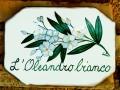 oleandro_bianco