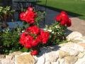 Residenza_degli_Olandri_-_Rose